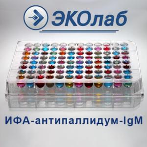 ИФА-антипаллидум-IgМ